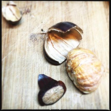 opened chestnut
