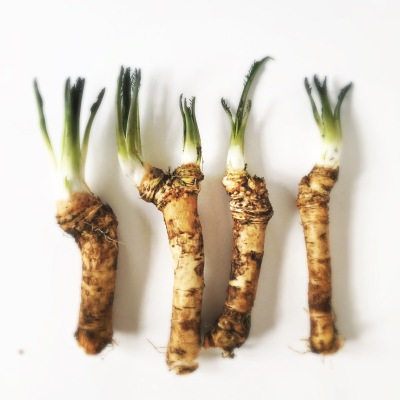 horseradishes